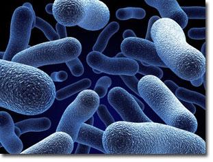 bacteria_microscope