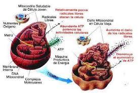 mitoc