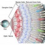 celulas ganglionare